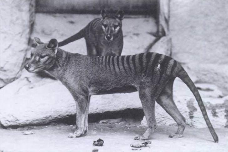 タスマニア
